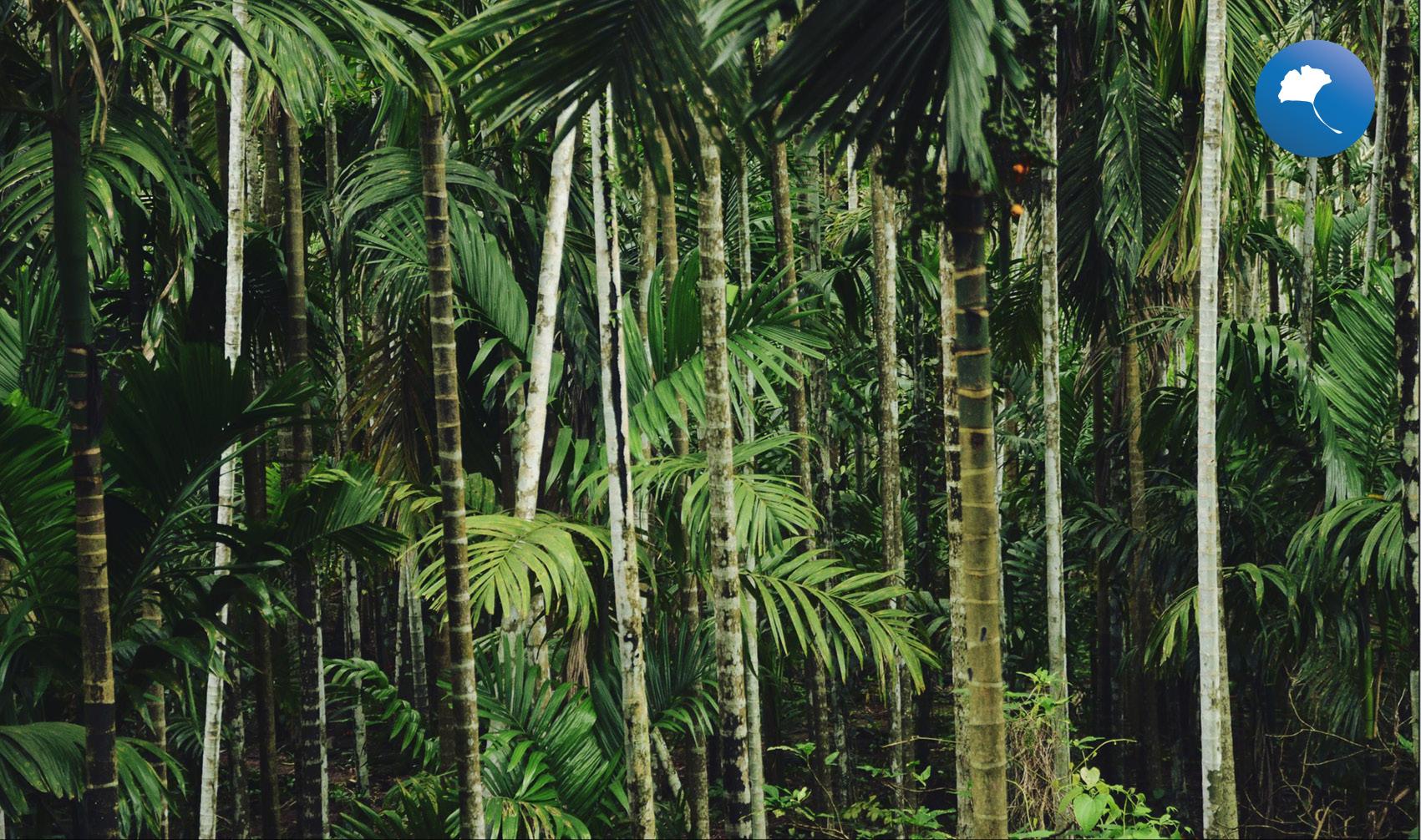 arbusti e palme